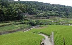 本明川ダム調査設計検討業務 【令和2年度優良施工業者(業務部門)表彰】